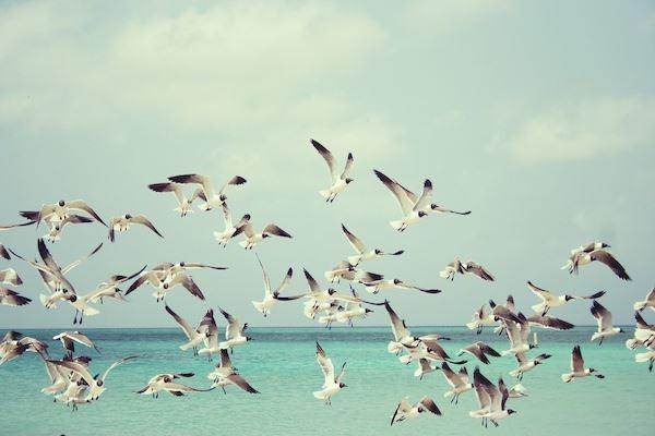 Wróżenie z lotu ptaków